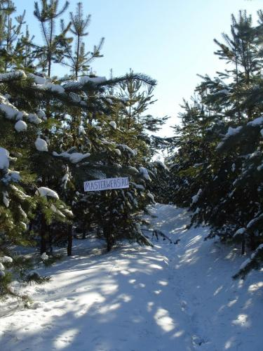 зимний-лес.jpg