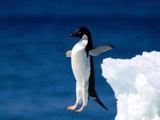 Пингвин рисунок.jpg