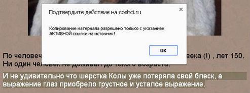 optimizaciya saita4.jpg